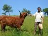 Zvířatka na farmě