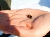 Nebojte se včeliček