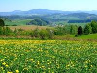 Okolí včelí farmy Rokytník