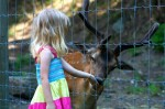 holčička krmí zvířátka