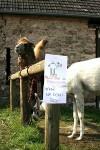 Velbloud nebo kůň?