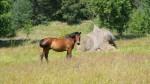 Fotografie koně na Lotyšském venkově