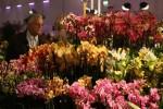 Výstava orchideí na velikonočním veletrhu