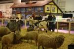 Veletrh pro celou rodinu, na obrázku jsou ovce a kozy na veletrhu v  Drážďanech
