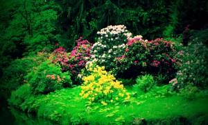 Zámecký park v Prùhonicích z jara září květy rododendronù a mnoha dalšich rostlin