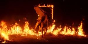 Kůň proskakujíc ohněm