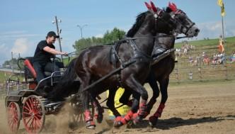 dva koně táhnoucí povoz na akci ve westernovém městečku Šiklův mlýn-den koně