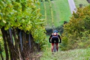 Cyklista na vinicích Znojemska