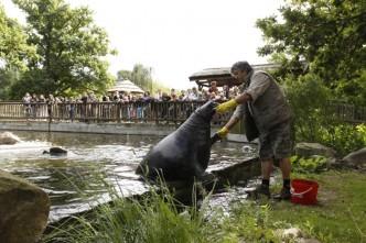 krmeni_tulenu, podkrušnohorský zoopark Chomutov, na obrázku ošetřovatel krmí tuleně