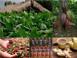 gastronomie Dominikánské republikyna obrázku místní produkty