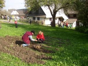 Děti kopou brambory na akci bramborová sobota