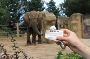 geocaching v ZOO Dvůr Králové keška u expozice slonůnad Labem na obrázku
