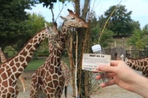 Geocaching v ZOO Dvůr Králové nad Labem na obrázku keška u expozice žiraf
