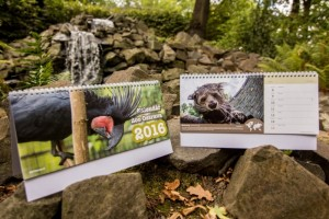 obrázek kalendářů ze zoo Ostrava pro rok 2016