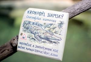 expozice krokodýlů v tropickém pavilonu v Jihlavské ZOO