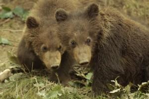 Medvědi v ZOO