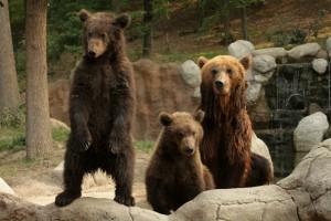 expozice medvědů v brněnské ZOO