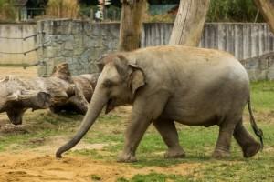Den pro slony, kam na slony