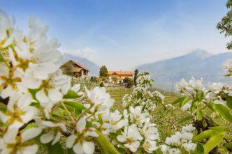 Rozkvetlé jabloně v Jižním Tyrolsku