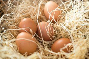 kvalitní vejce