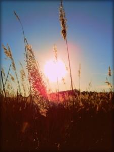 Jarní síla slunce