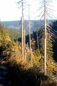 Cesta po hřebenu nad korytem Bílé opavy
