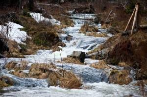 Příroda Jesenických hor