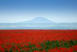 Pohled na horu Říp z obce Máslovice